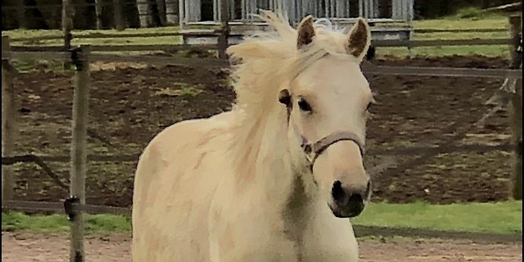 clos-bruyeres-cheval-appaloosa-quarter-horse-a-vendre-24300