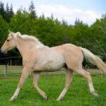 clos-des-bruyeres-cheval-appaloosa-lilys-cutest-24300