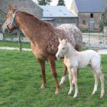 clos-des-bruyeres-cheval-appaloosa-peppy-peppysan-24300