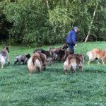 clos-des-bruyeres-elevage-chien-leonberg-24300-12